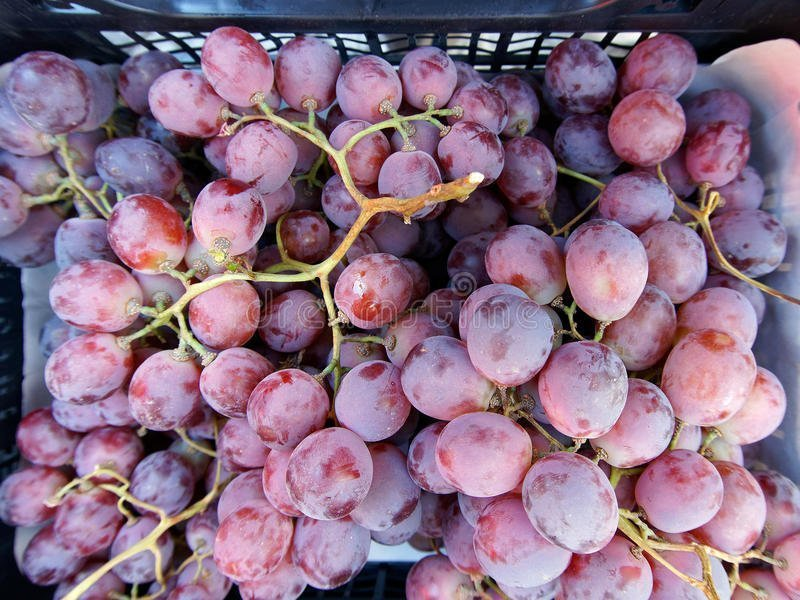 ripe pink grapes plastic crate bunches red table showing natural yeast bloom sale fresh fruit vegetable 93727720